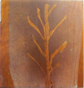træ (1)